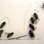 lalat 4