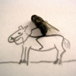 lalat 5